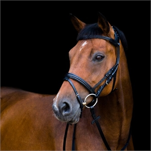 Stubben 2500 Freedom Bridle-stubben-Top Notch Wholesale